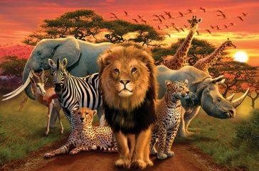 animaux afrique superstition mystique