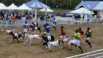 course de chèvre afrique
