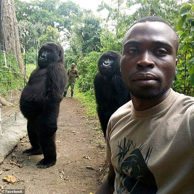 gorille selfie congo