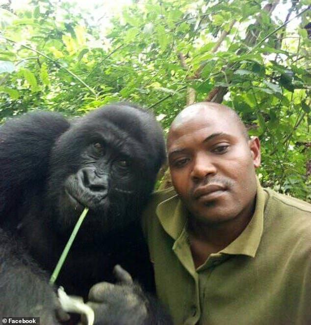 gorilles selfies congo