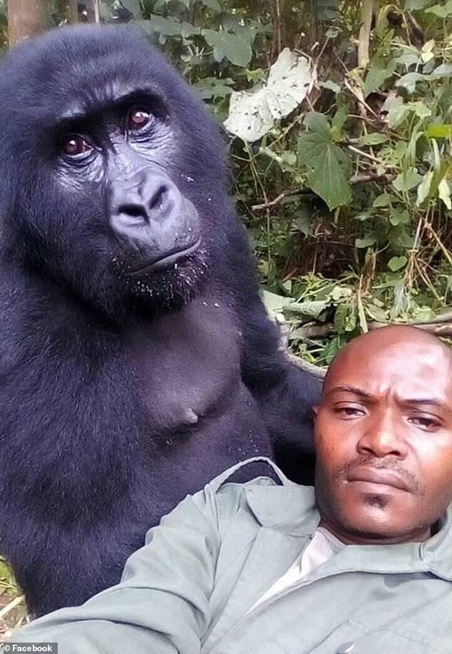 selfie congo gorille