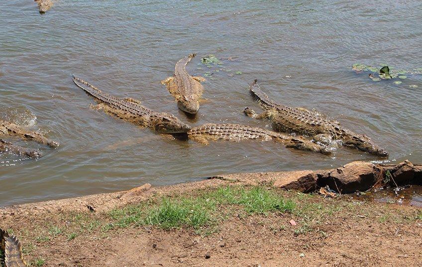 Lac aux Caïmans