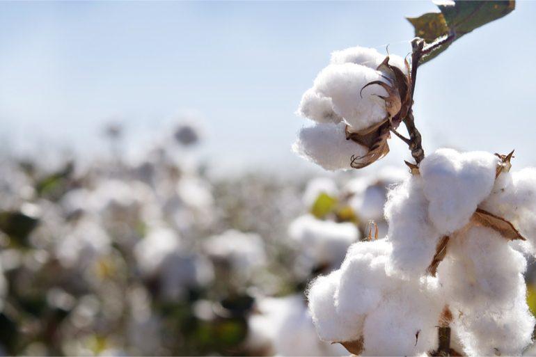 coton durable