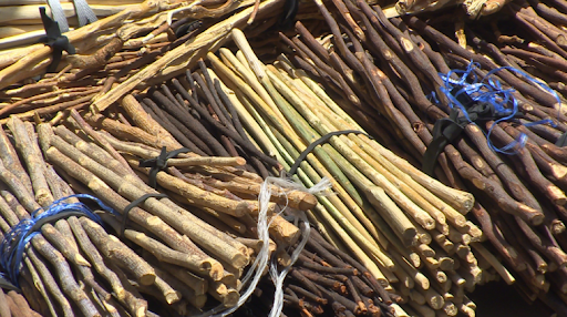 The gouro toothpick: the ancestral Ivorian aphrodisiac - Vudaf