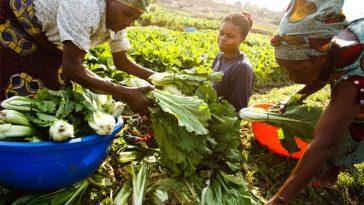 agrobusiness afrique